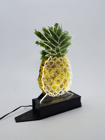 Pineapple Moss Lamp - Mobu