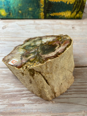 Petrified Wood Chunk