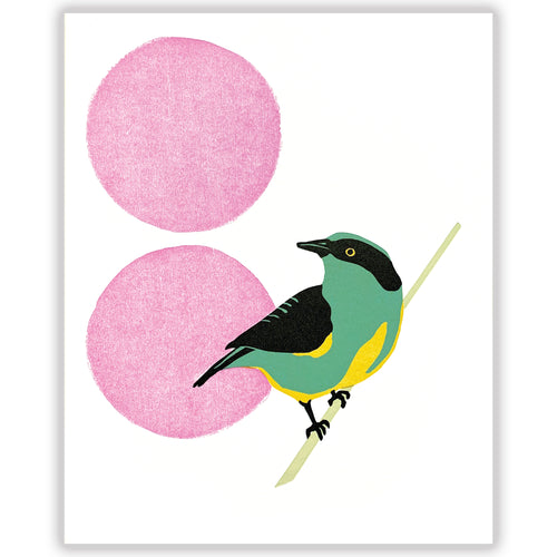 Yellow-Tufted Dacnis fine art linoleum block letterpress print