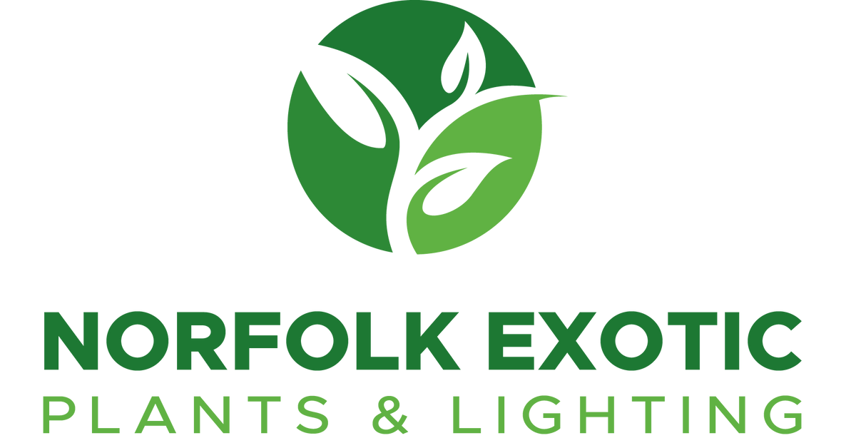 https://cdn.shopify.com/s/files/1/1806/8649/files/Norfolk_Exotic_Plants___Lighting.png?height=628&pad_color=fff&v=1553905291&width=1200
