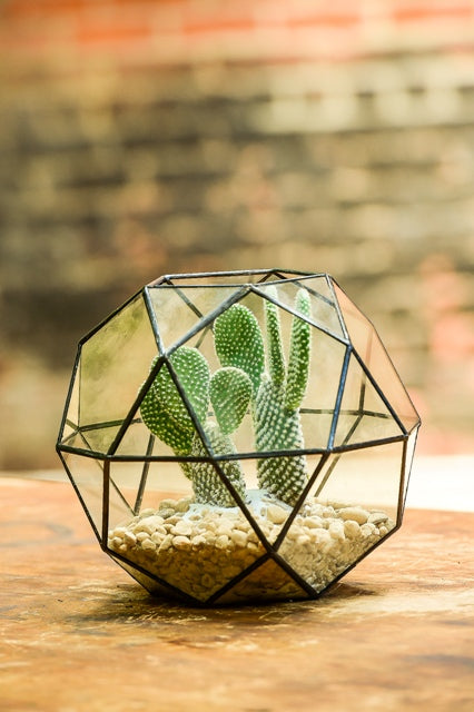 Design Any Space: The 3 Rules of Succulents