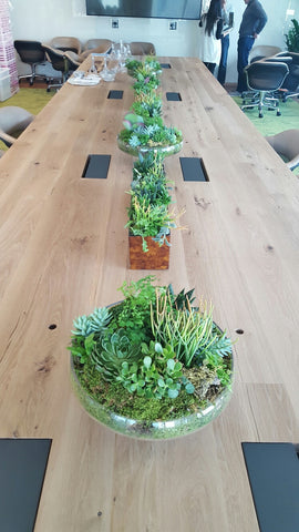 Succulent Delivery Boardroom Meeting NYC