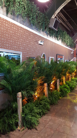 Areca Palm Fern Delivery Rental NYC