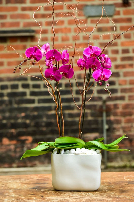 Double Purple Orchid