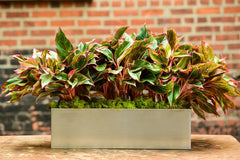 Red Aglaonema Tabletop Silver Rectangle Planter Delivery NYC