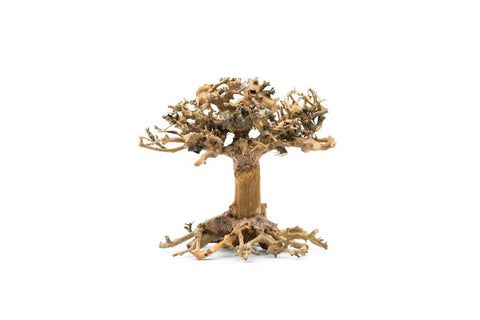 Aquarium Bonsai Tree - Extra Extra Small