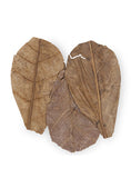 CaribSea Betta Leaf - Indian Almond Leaf