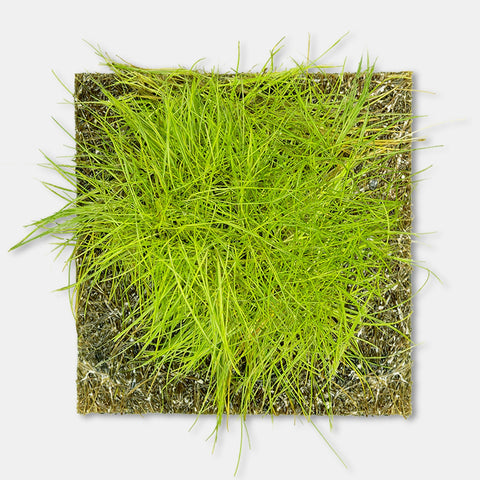products/Coco_Fiber_Mat_3x3_Square_-_Hairgrass_12682_copy__57421.1568313611__48222.1584393978.jpg