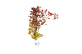 Ludwigia Natans 'Super Red' (Lead Bunch)