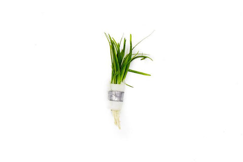 products/Sagittaria_Subulata_Lead_Bunch_6051_900x_5d16f89f-2c31-48e0-82a0-d77dc4c94b9a.jpg
