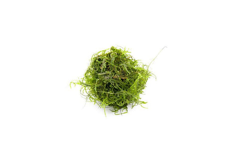 products/Spiky_Moss_Golf_Ball_6415_900x_beaf4675-a5ce-414e-9df0-e2400992b38b.jpg