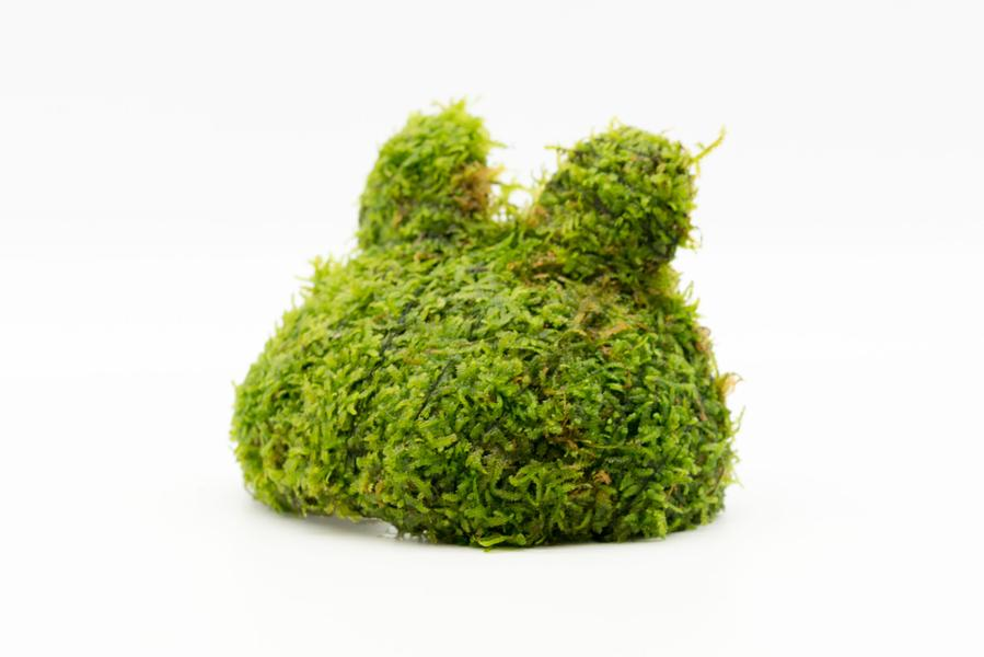 Christmas Moss on Teddy Bear
