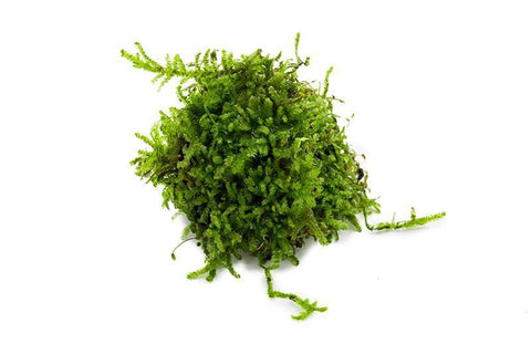products/christmas-moss-11725711769681.jpg