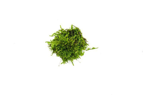 products/christmas-moss-11725711835217.jpg