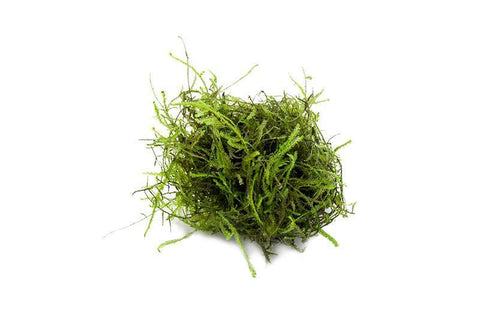 products/java-moss-11727071510609.jpg