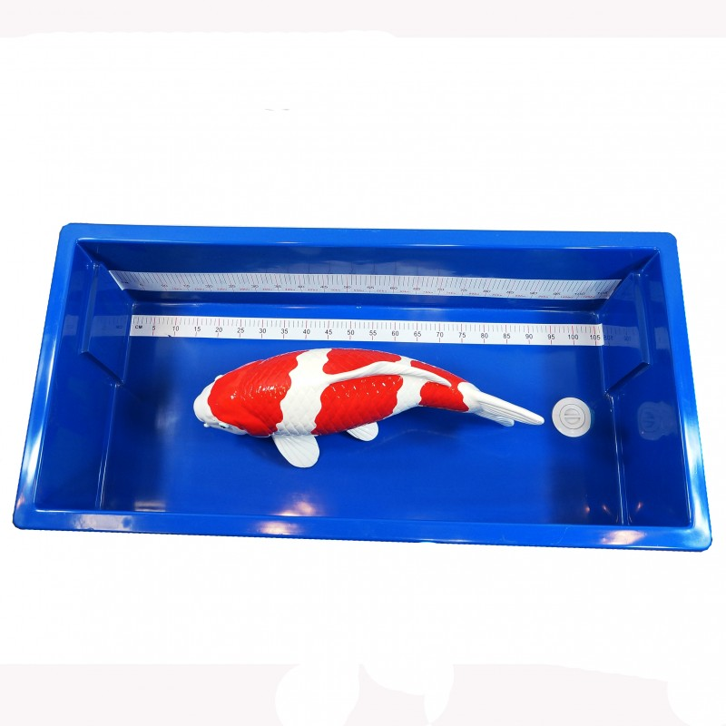 Large Rectangular Koi Measuring Tub (IN-STORE PICKUP ONLY)