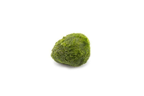products/marimo-ball-11726889582673.jpg