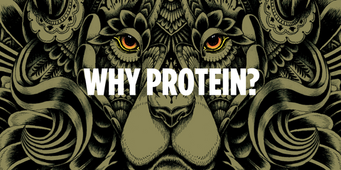 Why protein?
