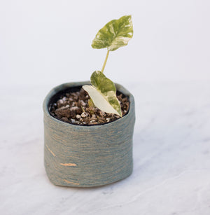 Natural Aqua Cork Handmade Fabric Pot Cover