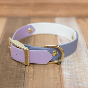 "Adventure Buckle Collar: Multi-Color (1"")"