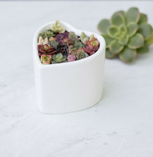 Ceramic Heart Planter Pot