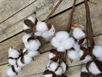 Farmhouse Style Cotton Boll Stems - 3 Farmhouse Style - Farmhouse Florals