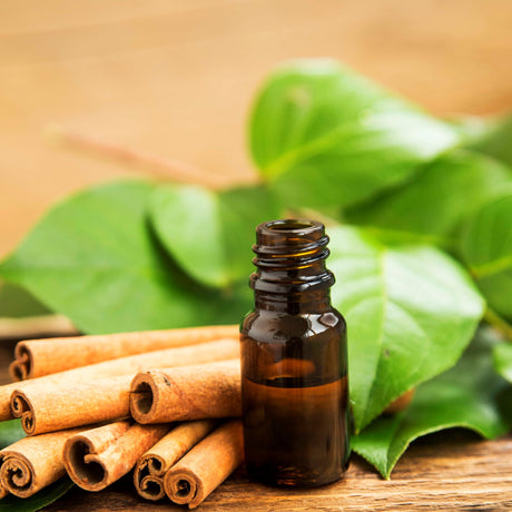 Buy Cinnamon Essential Oil at Spirit Aroma for only $5.00