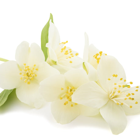 Buy Neroli Flower Water at Spirit Aroma for only $7.00