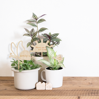 Graphic Plant Topper -Set of 3