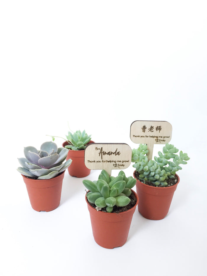 'Help Me Grow' Succulent Set