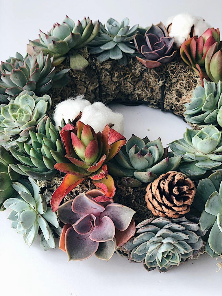 Full Succulents Wreath by Rabbit Island