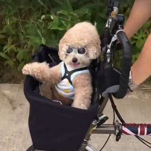 Doggie Bicycle Basket!