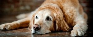 What Should I Feed My Senior Dogs?