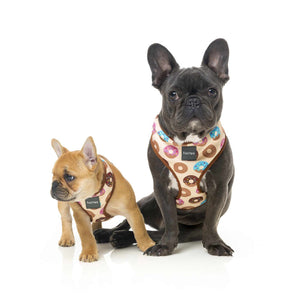 Fuzzyard Dog Harness Go Nuts