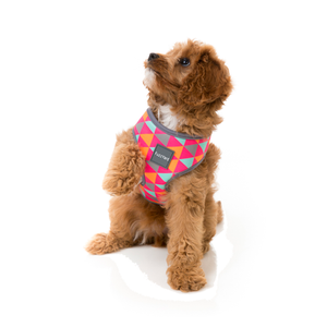 Fuzzyard Dog Harness Crush