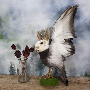 Rogue Taxidermy White, Tan and Grey Bunny Bird - Wings Up