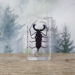 Whip Scorpion in Resin Block