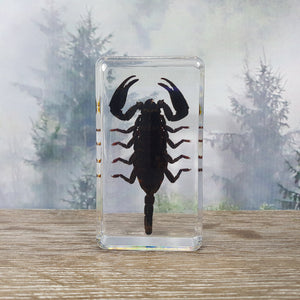 Black Scorpion in Resin Block