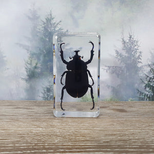 Unicorn Beetle in Resin Block