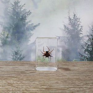 Spiny Spider in Small Resin Block