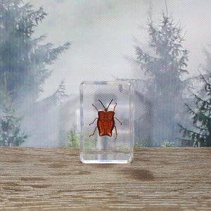 Ghost Bug in Small Resin Block