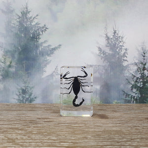 Black Scorpion in Small Resin Block