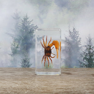 Fiddler Crab in Resin Block