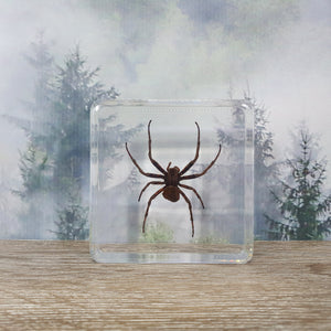 Spider in Square Resin Block