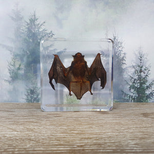 Bat in Resin Block