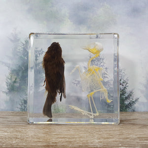 Bird & Bird Skeleton in Resin Block