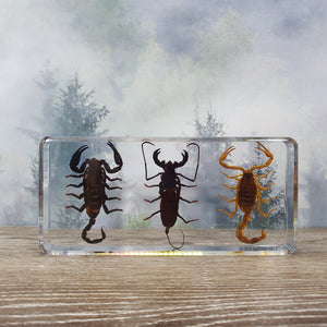 Three Scorpion Set in Large Resin Block