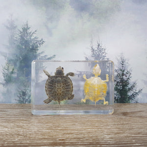 Turtle & Turtle Skeleton in Resin Block