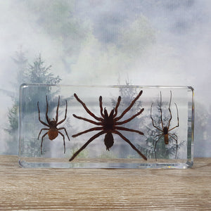Three Spider Set in Large Resin Block