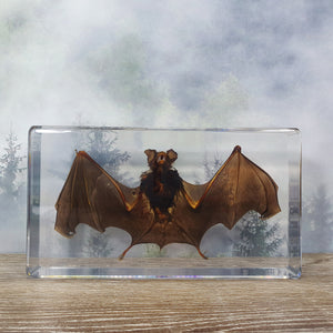 Bat in Extra Large Resin Block